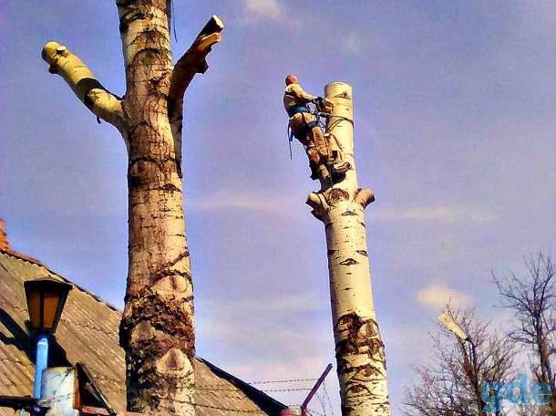 Спил и кронирование аварийных деревьев, фотография 2