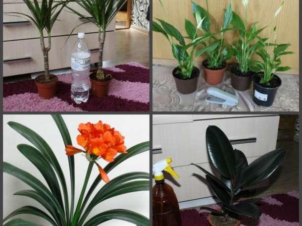 Комнатные растения (разные), фотография 4