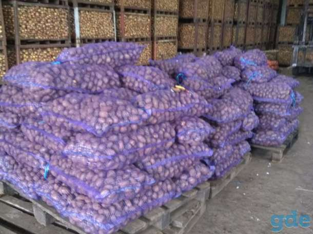 Картофель оптом от производителя, фотография 1