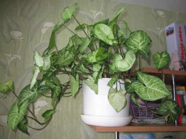 Красивые домашние растения для дома и офиса, фотография 7