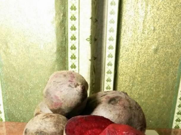 Свекла 9,00 руб/кг, фотография 4