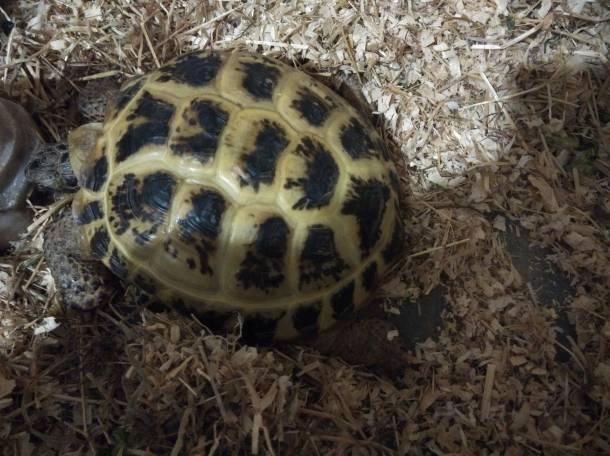 изготовлении отдам сухопутную черепаху в хабаровске термобелья для