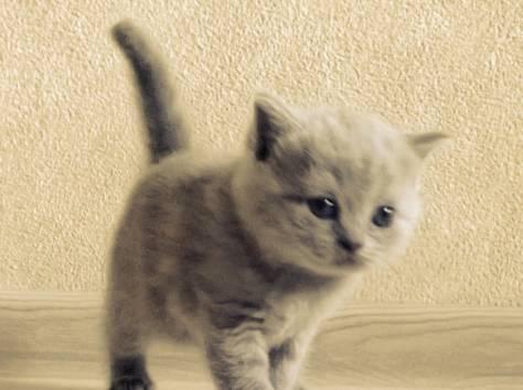 Продажа котят в усурийске Всё выше