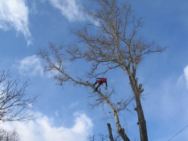 сегодня ощутите кто занимается опиливанием деревьев эту присматривал