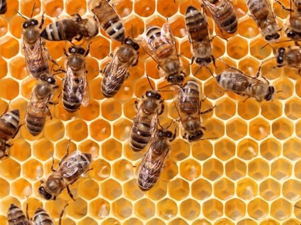 Продаю дадановские пчелосемьи, фотография 1