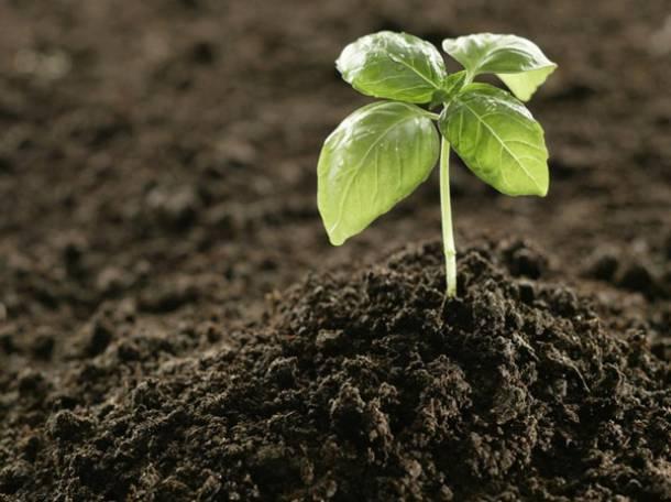 Грунт растительный, фотография 1