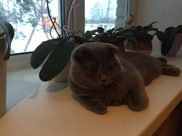 Отдам в добрые руки котика, фотография 2