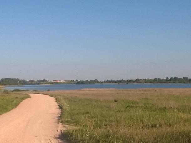Участок с садом и срубом рядом с озером, Псковская обл., Палкинский р-н, д.Данилкино, фотография 6