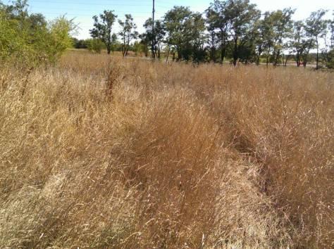10,5 соток земли продам в Ростовской области, фотография 4