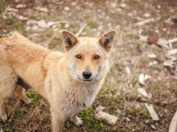 отдам щенков от разных собак, фотография 2