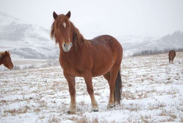 Лошади, фотография 1