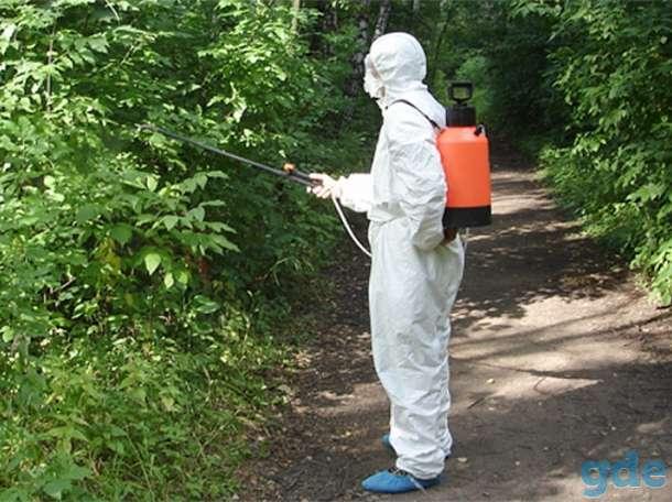 Уничтожение клопов, тараканов, муравьев, фотография 3