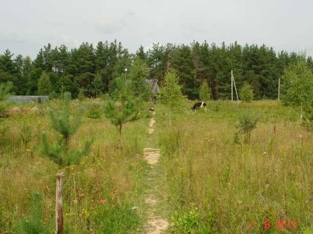 20га земли в 250 км от Москвы (для фермерского хозяйства), фотография 2