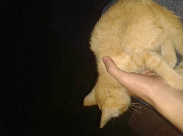 Отдам кошку в хорошие руки!, фотография 1