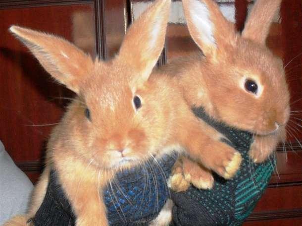 нутрии и кролики, фотография 2