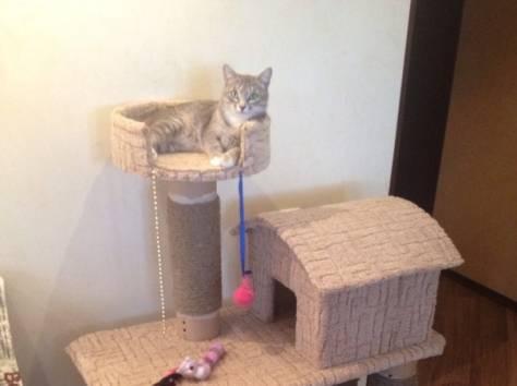 Дома-когтеточки для кошек своими руками