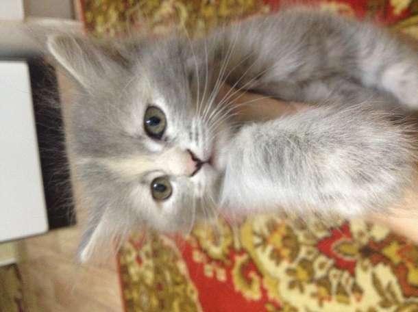 Кошечка , фотография 5