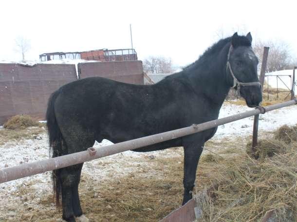 Продам коня, фотография 4