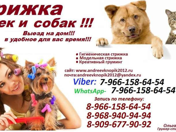Стрижка кошек и собак выезд на дом Москва и Москвовская область, фотография 1
