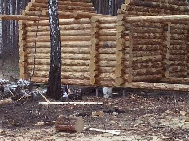 Срубы из отборной сосны от производителя., фотография 4