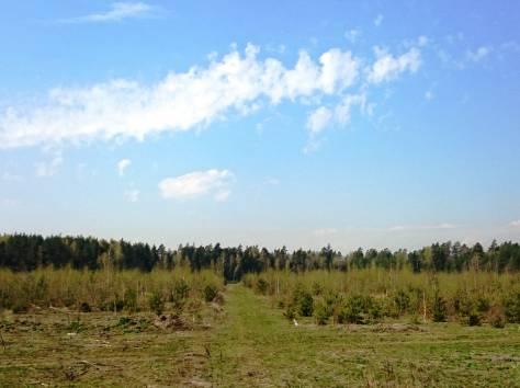 Участки у леса, ПГТ, фотография 3