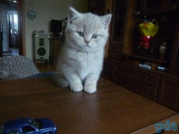 Продажа породистых котят, фотография 1
