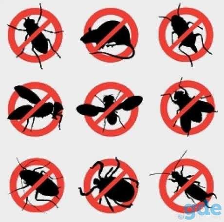 Уничтожение любых насекомых-вредителей, фотография 1
