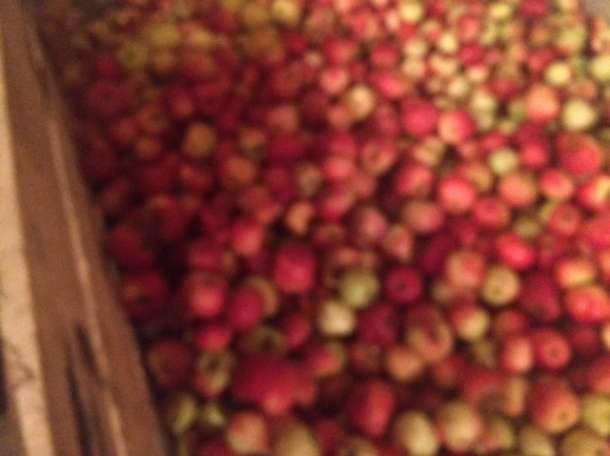 Продаю яблоки зимних сортов (Голден, Семеренко, Антоновка) в  г Нижний Новгород пос Новинки, фотография 6