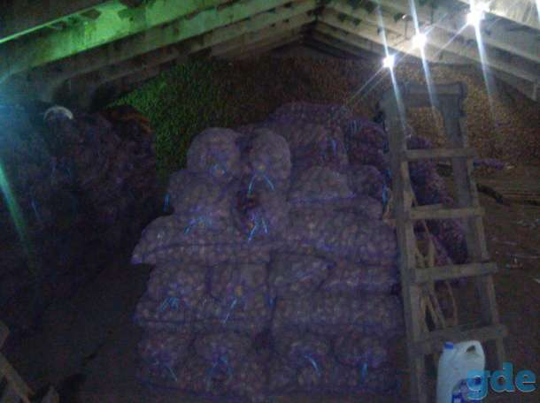 Картофель оптом от производителя, фотография 3