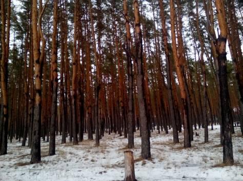 Обрезка деревьев , фотография 1