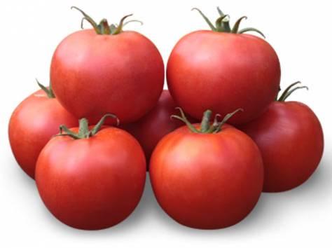 Семена Китано. Предлагаем купить семена томата KS 835 F1, фотография 1