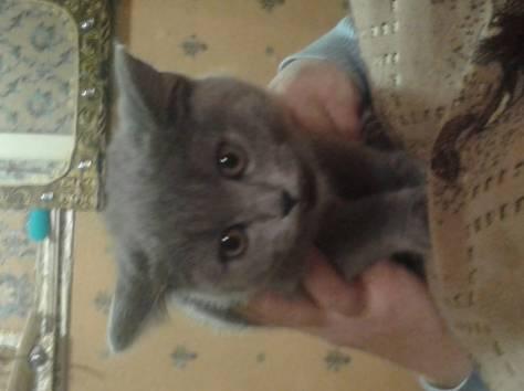 Продам котёнка , фотография 1