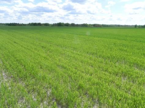 Земли для сельскохозяйственного производства 68,8 га, фотография 1
