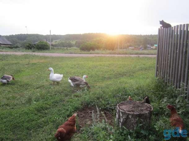 Дом в деревне, фотография 4