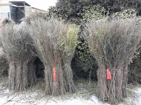 Продам веники (метла) чилижные оптом (чилига), фотография 2
