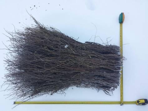 Продам веники (метла) чилижные оптом (чилига), фотография 3
