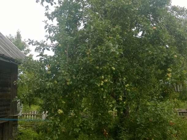 Домик у озера, Качаново, Палкинский р-н, Псковская область, фотография 9
