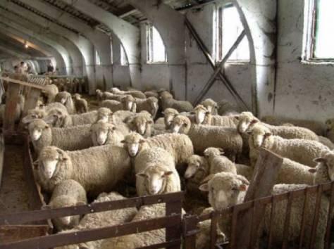 Продажа  прибыльного  Крестьянско-Фермерского хозяйства в Ростовской обл., фотография 2