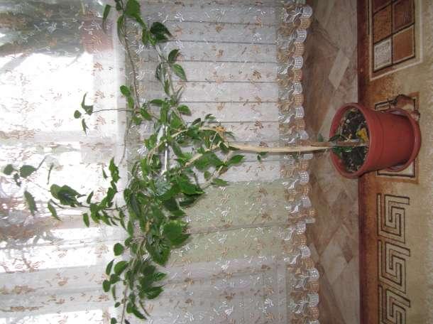 Красивые домашние растения для дома и офиса, фотография 3