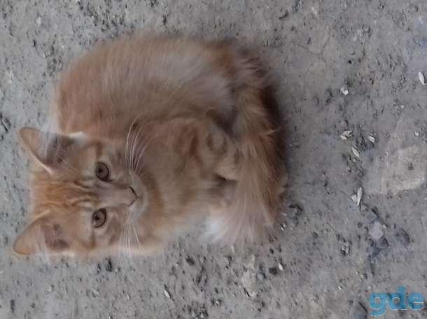 Отдам котёнка в хорошие руки, фотография 2