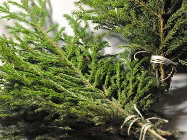 Новогодние деревья, фотография 1
