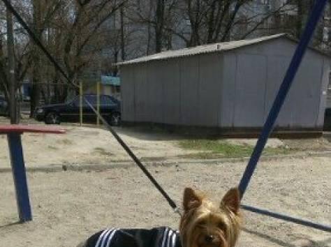 одежда для собак, фотография 3