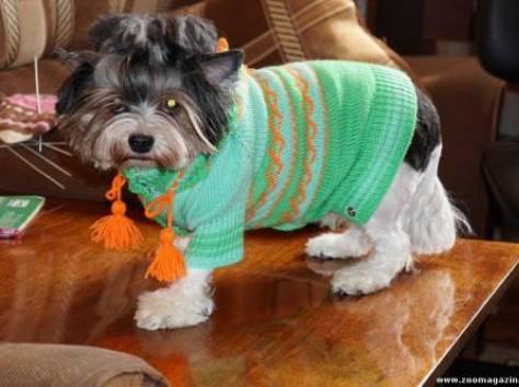 одежда для собак, фотография 5