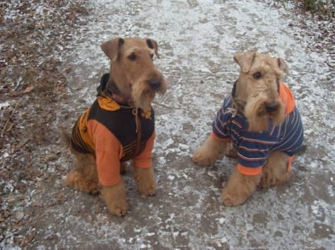 одежда для собак, фотография 7