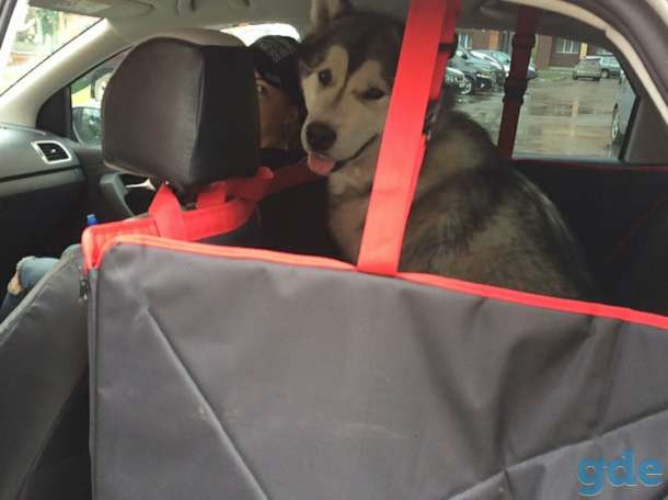 Автогамак для перевозки животных, фотография 1