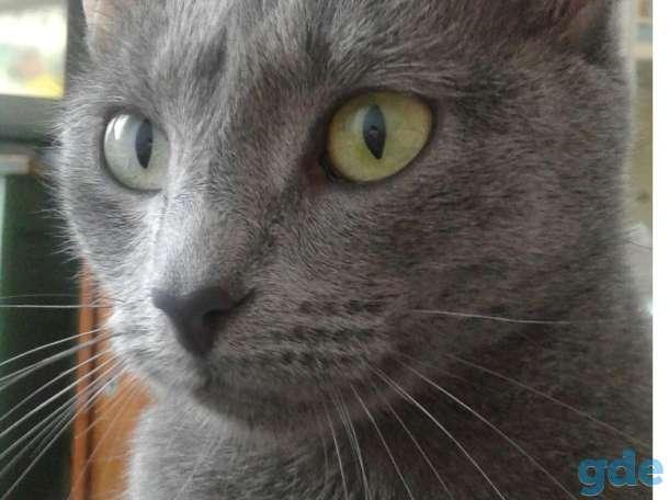 Пропала кошка в Реутове на ул. Октября
