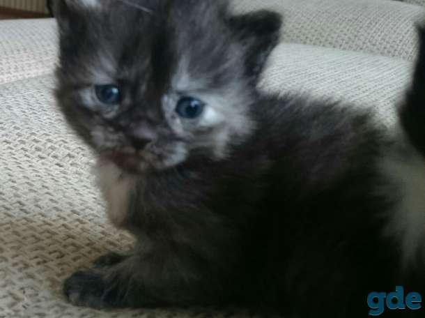 Котята, фотография 3