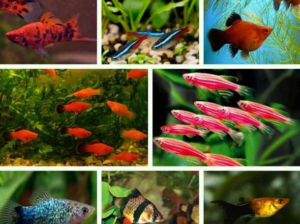 Красивые аквариумные рыбки в ассортименте, фотография 1
