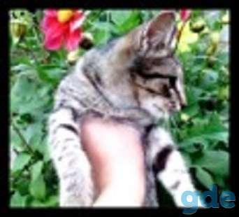 Котята с зелеными глазками,выполняют некоторые трюки., фотография 1