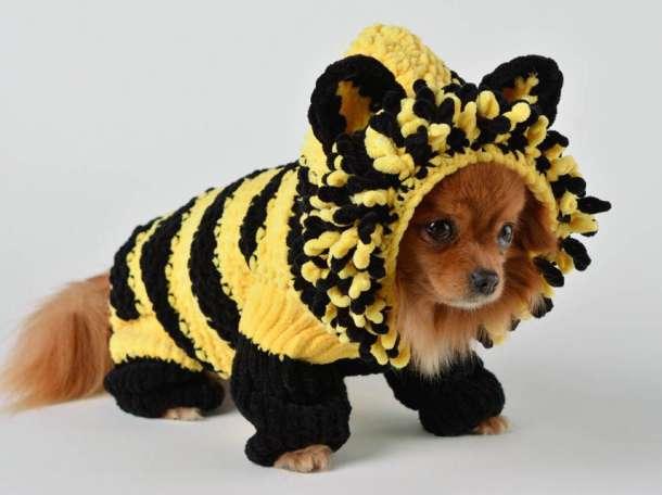 вязаная одежда для собак товары для животных в омске животные и